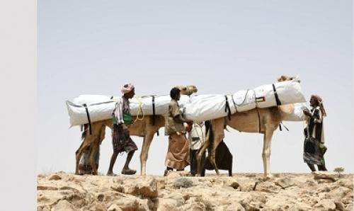 فرق الهلال الأحمر الإماراتي تتحدى التضاريس وتستخدم الجمال لإغاثة عدد من المناطق الريفية في حضرموت