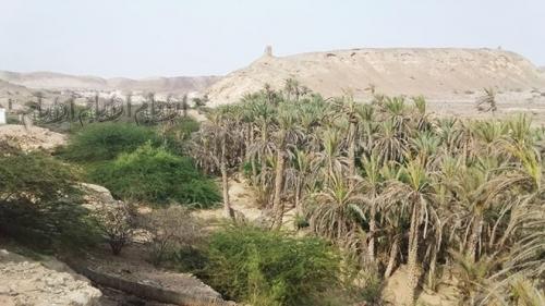 مزارعو هيثة بشبوة: السيول دمرت أراضينا ولم نجد من يلتفت إلينا