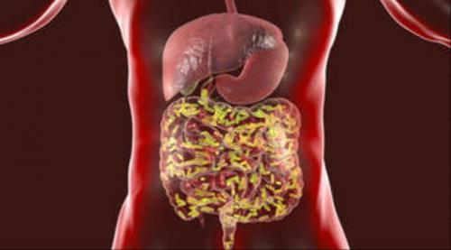 بكتيريا الأمعاء يمكن أن تغذي نمو أورام سرطان البروستات وتسمح لها بمقاومة العلاج