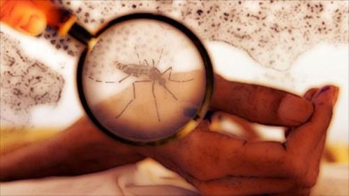 كيف تنتقل حمى الضنك من الجسم المصاب إلى السليم